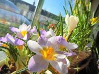 flowerswindow190112