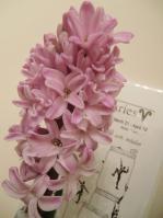 pinkhyacinth