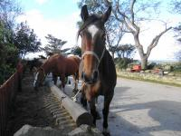 grangehorse09122
