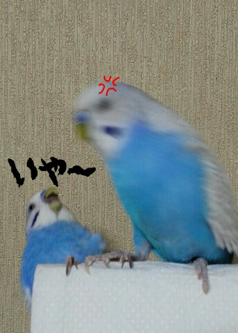 fc2_2014-09-23_06-55-13-643.jpg