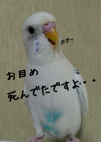 fc2_2014-09-29_14-03-59-471.jpg