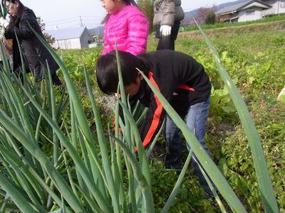 111127やなもり農園収穫祭002