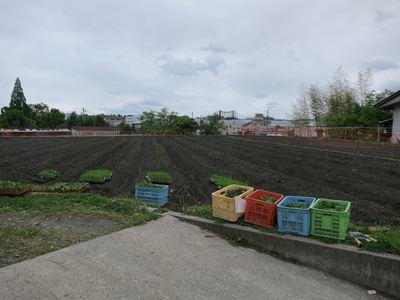 120503やなもり農園苗植え005