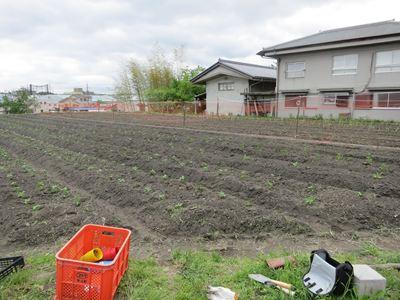 120503やなもり農園苗植え008