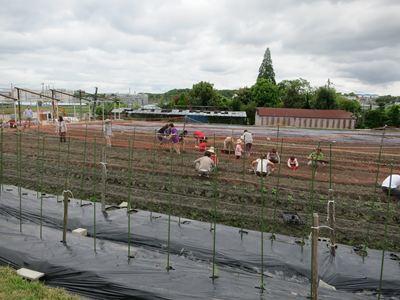 120503やなもり農園苗植え007