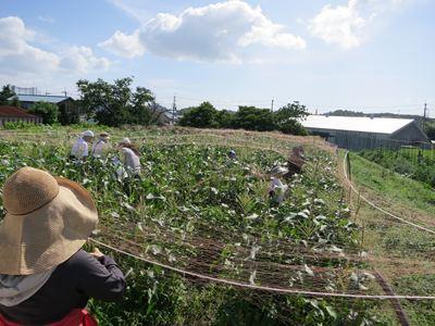 120708やなもり農園収穫祭001