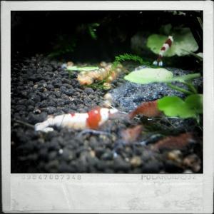 CameraZOOM-20111216133625741.jpg
