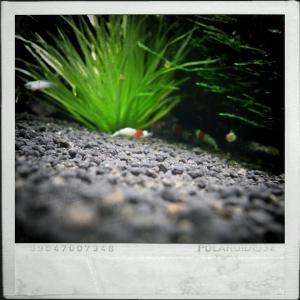 CameraZOOM-20111216133650605.jpg