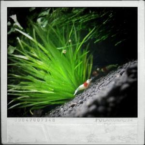 CameraZOOM-20111216133953993.jpg