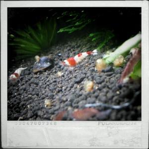 CameraZOOM-20111216134107323.jpg
