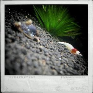 CameraZOOM-20111216134218515.jpg
