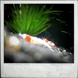 CameraZOOM-20111216134405721.jpg