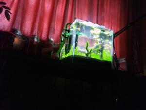 EHEIM LED