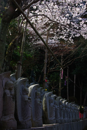 桜と地蔵仏1