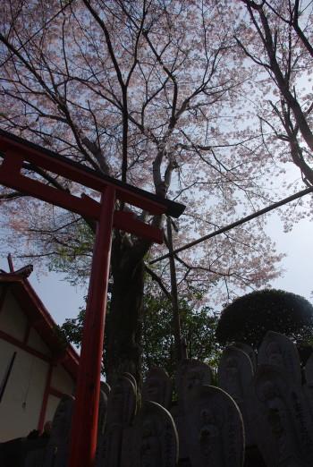 桜と地蔵仏