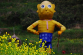 菜の花と案山子 稲淵