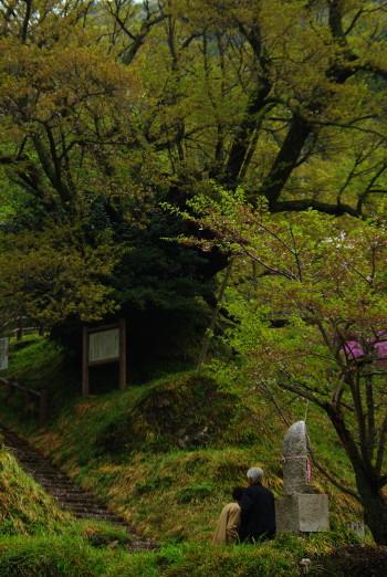 千年桜と老夫婦1