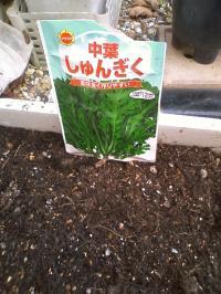9-13春菊種まき