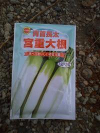 9-13大根種まき