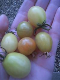 12-30今日の収穫
