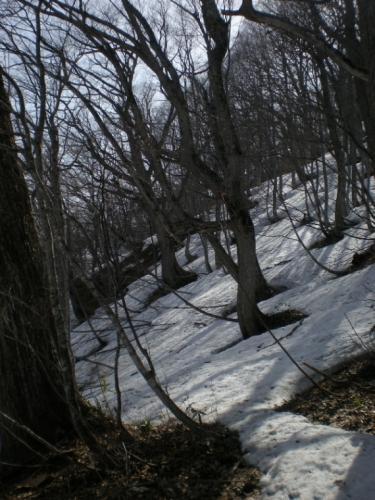 2010_0426CC.jpg