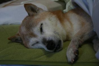 朝は熟睡~