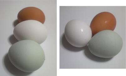 egg1110.jpg