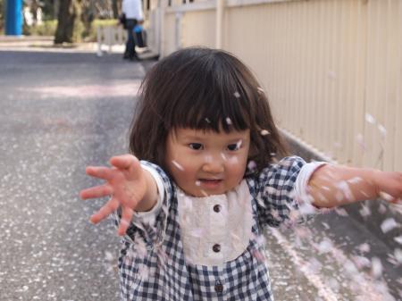 ふぅちゃんと桜3