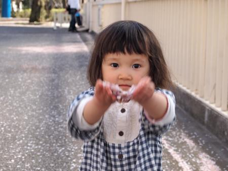 ふぅちゃんと桜2