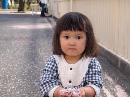 ふぅちゃんと桜1