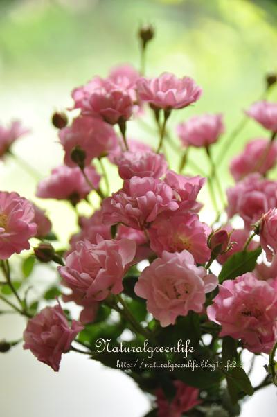 mini薔薇 ほほえみ