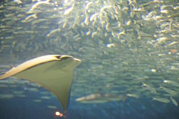 エイとサメの水槽