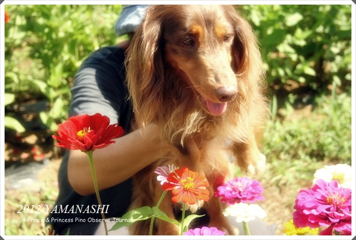 yamanashi114.jpg