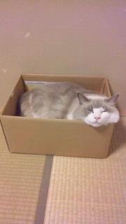 箱にて顔出し