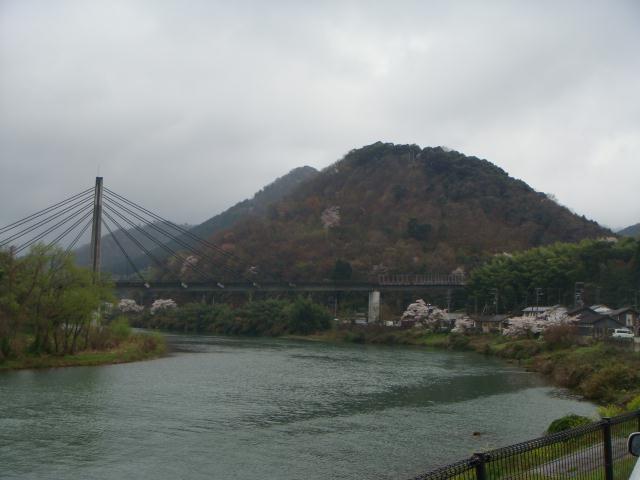 由良川並松河畔