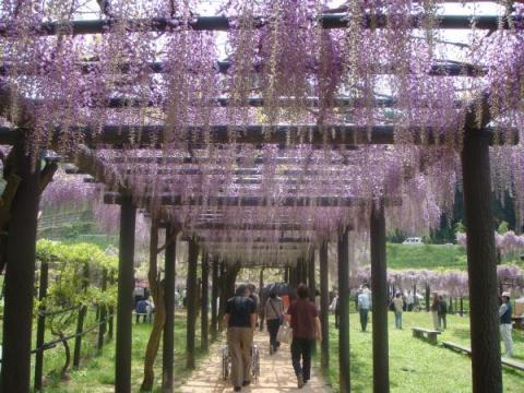 藤棚の回廊トンネル