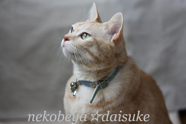 IMG_3968daisuke-15.jpg