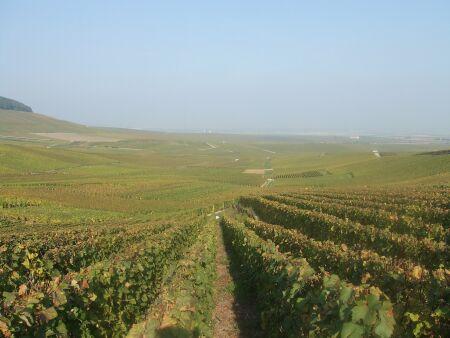 2010_1015フランスワイン旅行02421