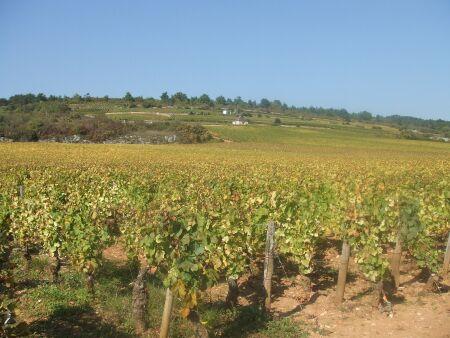 2010_1015フランスワイン旅行01941