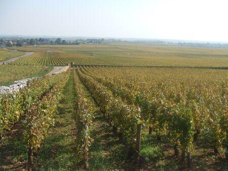 2010_1015フランスワイン旅行01991