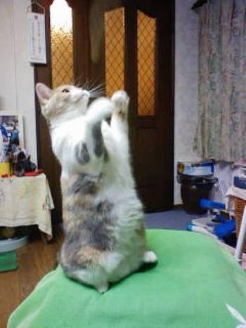 猫パンチ1