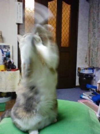 猫パンチ2