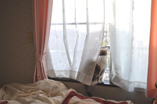 朝の窓辺1