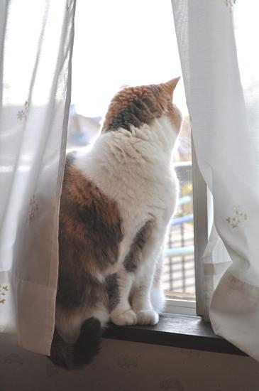 朝の窓辺2