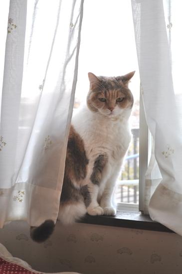 朝の窓辺3