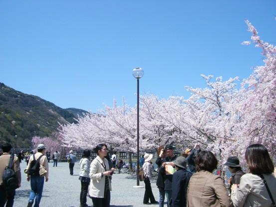 嵐山2010年4月3