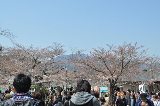 嵐山2012年4月3