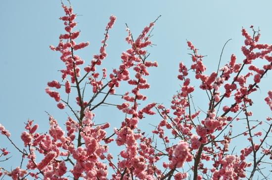 嵐山2012年4月8