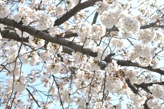 嵐山2012年4月10