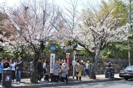 嵐山2012年4月11